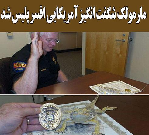 استخدام یک مارمولک در اداره پلیس (عکس)