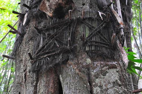 دفن جسد این نوزادان در تنه درخت (عکس)