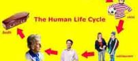 چرخه زندگی و خانواده چیست؟