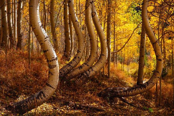 جنگلی عجیب و غریب به شکل منحنی