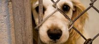 اطلاعیه انجمن حمایت از حیوان ها (طنز)