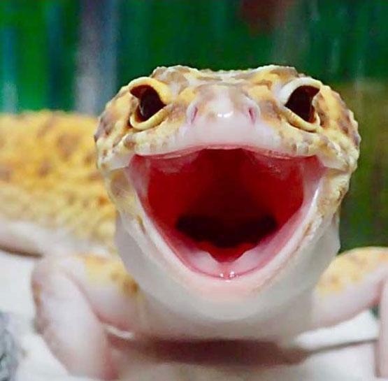 خنده دارترین و بامزه ترین مارمولک دنیا (عکس)