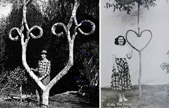 درختانی عجیب که تا بحال ندیده اید (عکس)