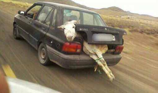 عکس های بسیار خنده دار از همه جای دنیا