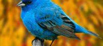 پرنده های عجیب که رکورد شکن گینس شدن (عکس)
