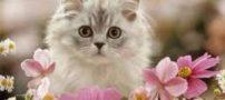 گربه ها احساسات انسان را به بازی میگیرند!