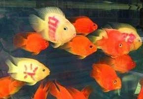 فروش ماهی خالکوبی شده در چین