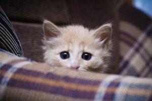 دستگیری قاتل قصی القلب گربه ها (عکس)