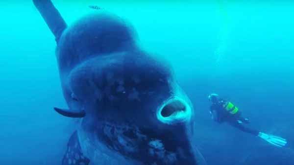باور نکردنی ترین موجوداتی که تا بحال ندیده اید