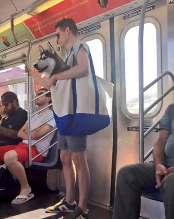 سوژه های بسیار جالب و خنده دار در متروها