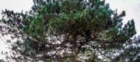 رشد درختی عجیب بر روی سقف کلیسا (عکس)