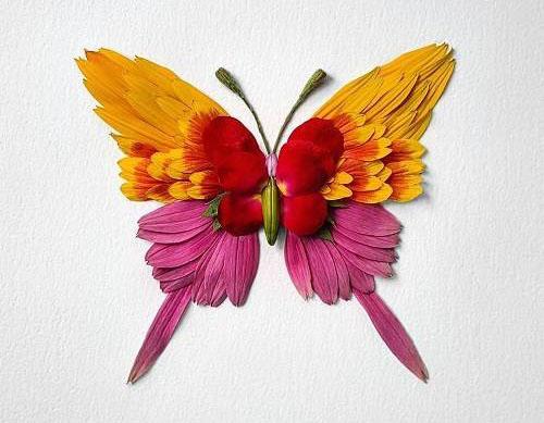 هنر زیبای تبدیل گل به حشرات زیبا (عکس)