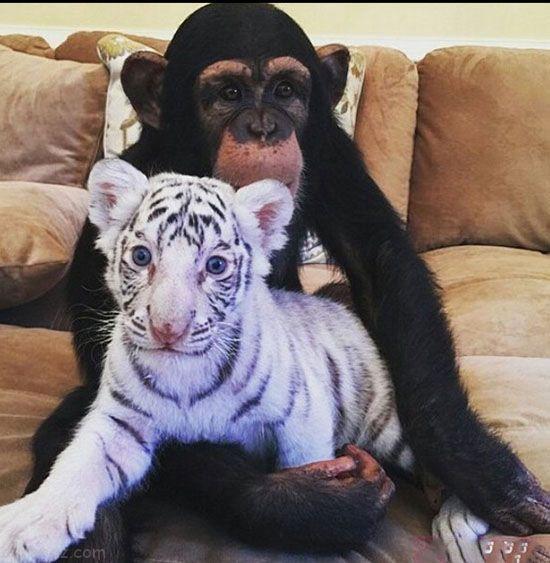 زندگی عجیب این پسر پولدار با حیوانات وحشی (عکس)