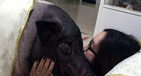 رابطه جنسی این دختر با یک خوک (عکس)