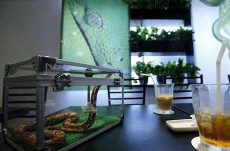خوردن قهوه در این کافی شاپ دل شیر میخواهد (عکس)