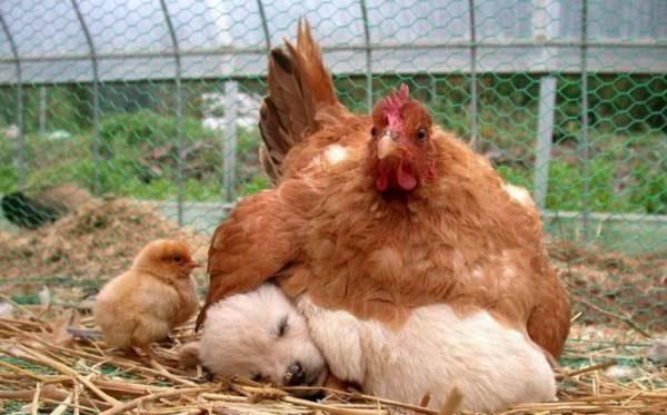 با عجیب ترین مادر دنیا آشنا شوید (عکس)