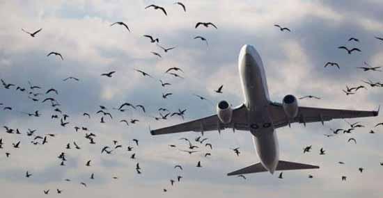 وقتی این پرنده ها باعث مرگ انسان ها میشوند
