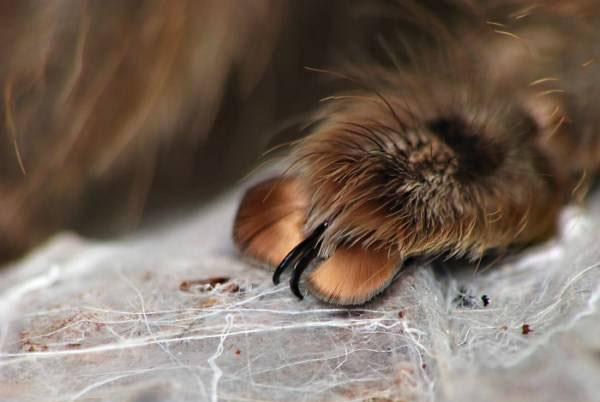 جالب ترین جای بدن عنکبوت که تا بحال ندیده اید