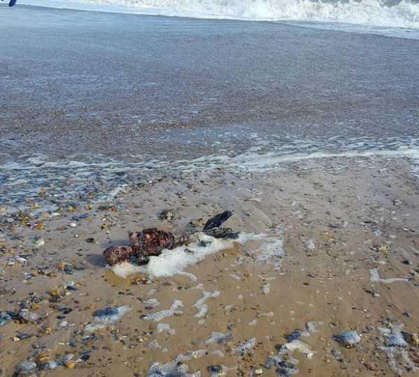جسد متلاشی شده یک پری دریایی در ساحل (عکس)