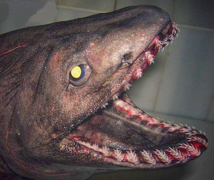 کشف ترسناکترین کوسه که هم قدمت دایناسورهاست (عکس)