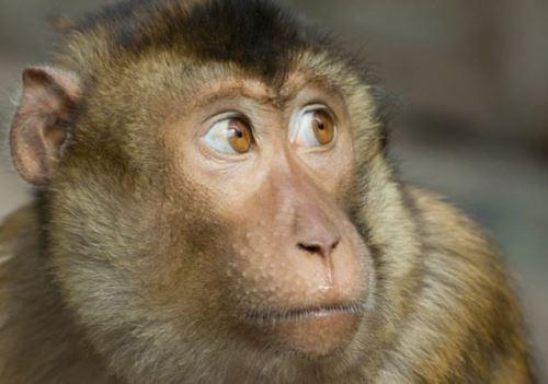 حیواناتی که زنده زنده خورده می شوند ! + تصاویر