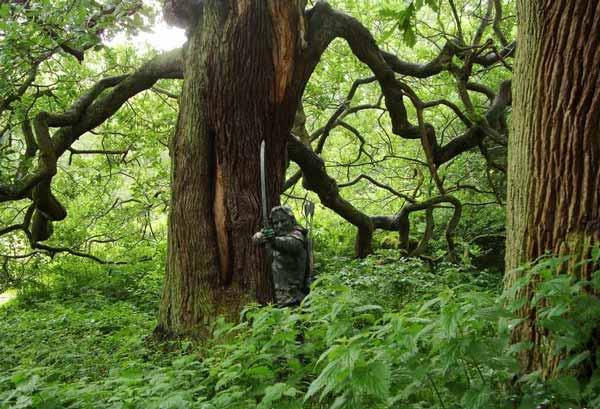 جنگلی که شما را مقابل رابین هود میگذارد (عکس)