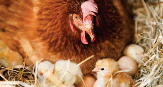 حقایق بی نظیر در مورد حرف زدن حیوانات (عکس)