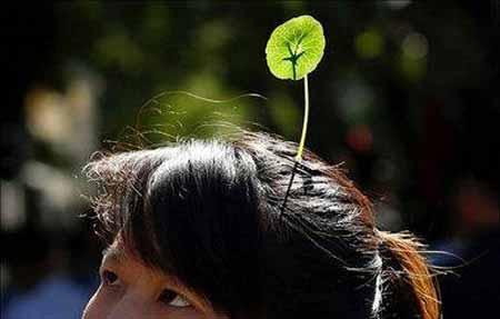 کار عجیب مردم پکن کاشت گیاه روی سرشان (عکس)