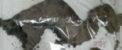 کشف جسد یک دایناسور بسیار عجیب (عکس)