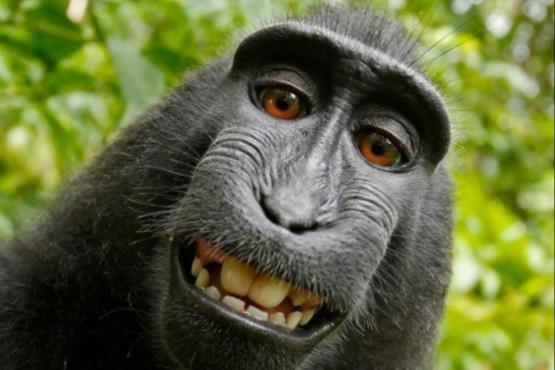 بهترین میمون سلفی باز در دنیا (عکس)