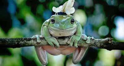 عکس های خنده دار از دنیای بامزه حیوانات