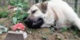 این سگ باوفا از قبر صاحبش دل نمیکند (عکس)