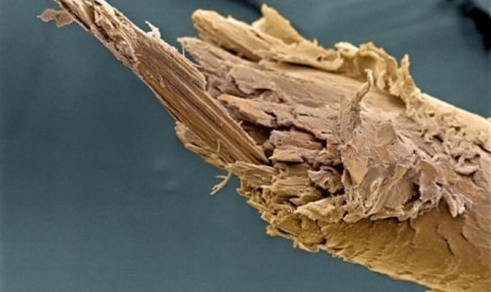 عکس هایی از زیر میکروسکوپ