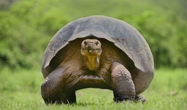 عکس های دیدنی از کندترین و سریع ترین حیوانات
