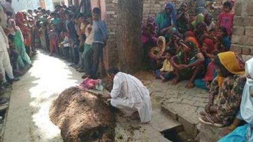 شوهری که زنش را زیر مدفوع گاو دفن کرد (عکس)
