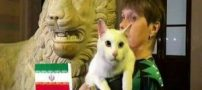 پیش بینی گربه پیشگو از بازی ایران و اسپانیا (عکس)