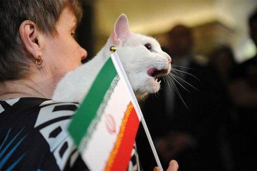 پیش بینی برنده بازی ایران و پرتغال توسط آشیل گربه پیشگو