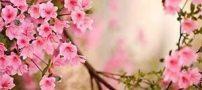جملات پر معنا و سخنان حکیمانه اندیشمندان
