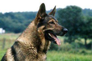 جایزه هفتصد میلیون تومانی برای کشتن این سگ (عکس)