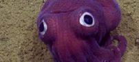 حیوانات عجیب به شکل فضایی در عمق دریا