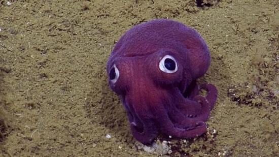 حیوانات عجیب به شکل فضایی در عمق دریا،حیوانات عجیب،موجودات دریایی،موجودات عجیب دریایی