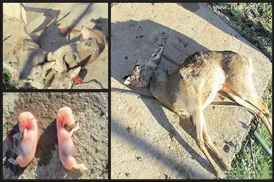 عکس های دلخراش از شکار بیرحمانه حیوانات (16-)