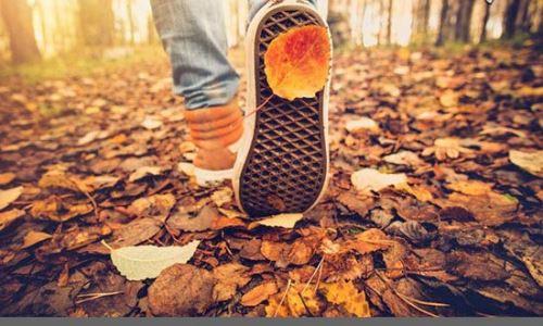 تصاویری از عجیب ترین تغییراتی که در فصل پاییز روی می دهد