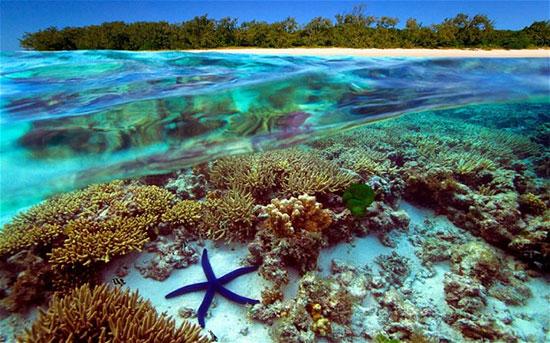 صخره مرجانی بزرگ در استرالیا،زیباترین مکان ها،عکس،مکان های زیبا،چشم اندازها و مناظر زیبا