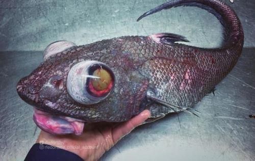 تصاویر چندش آورترین موجودات آبی دنیا