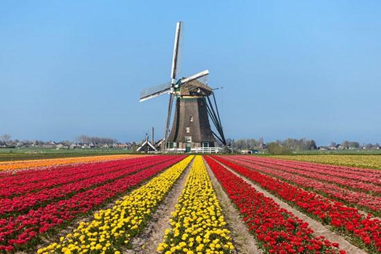 مزارع لاله در هلند،زیباترین مکان ها،عکس،مکان های زیبا،چشم اندازها و مناظر زیبا