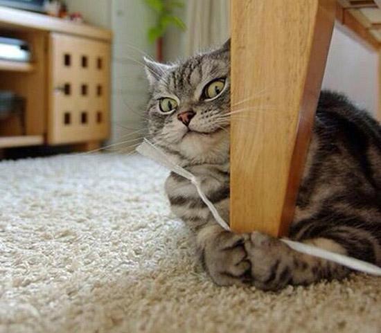 عکس های بامزه از سگ و گربه های ملوس