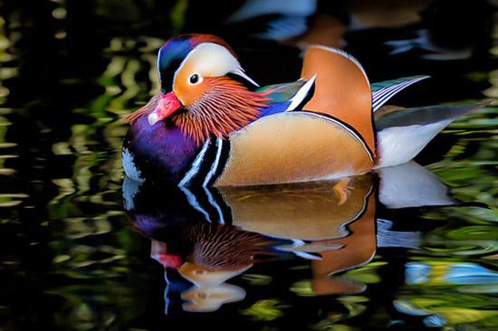 پرندگان عجیب که بیشتر شبیه موجودات فضایی اند (عکس)