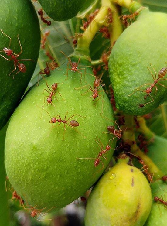 خطرناک ترین و کشنده ترین حشرات دنیا (عکس)