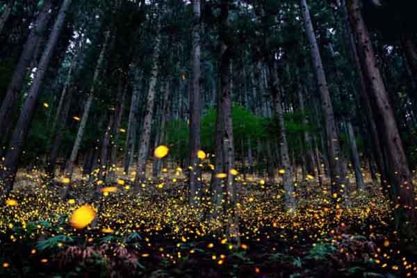 عکس هایی بی نظیر از موجودات شب نما